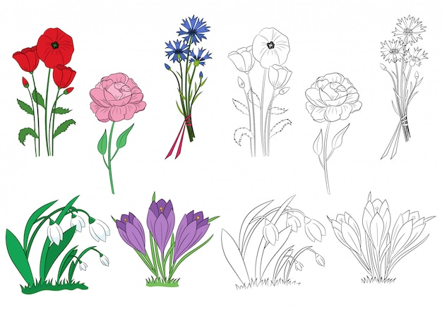 Zestaw wiosennych kwiatów. ręcznie rysowane przebiśniegi, krokusy, piwonia, chaber, mak. zarys kwiatów.