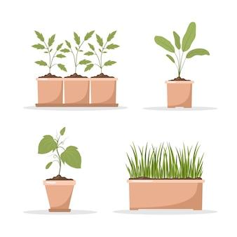 Zestaw wiosennych sadzonek w doniczkach.
