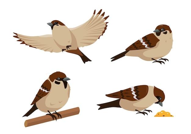 Zestaw wróbli w różnych pozach na białym tle. kolekcja ptaków wróbli