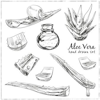 Zestaw wyciągnąć rękę aloe vera. ilustracja na białym tle. kuchnia ręcznie rysowane zioła i przyprawy. kolekcja zdrowie i natura.