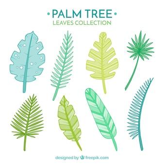 Zestaw wyciągnąć rękę liści palmowych