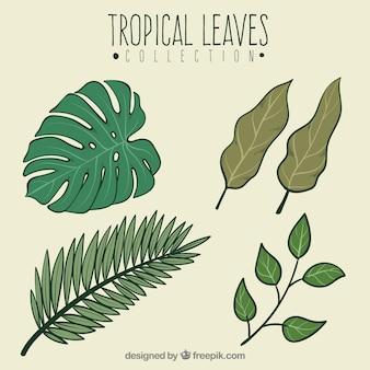Zestaw wyciągnąć rękę tropikalnych liści