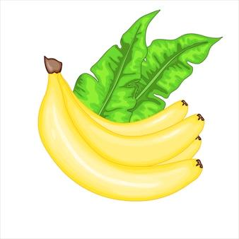 Zestaw z bananami i liśćmi bananowca. kolekcja kreskówka lato w wektorze.
