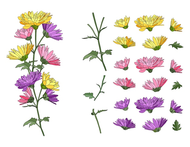 Zestaw z łodyg i liści na białym tle