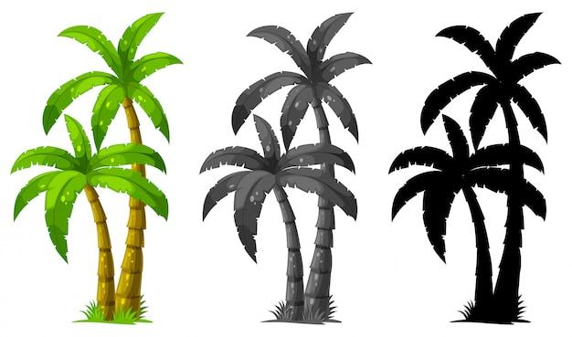 Zestaw z palmą