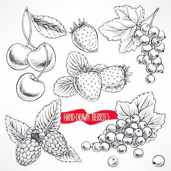Zestaw z różnymi dojrzałymi jagodami i liśćmi. ręcznie rysowana ilustracja