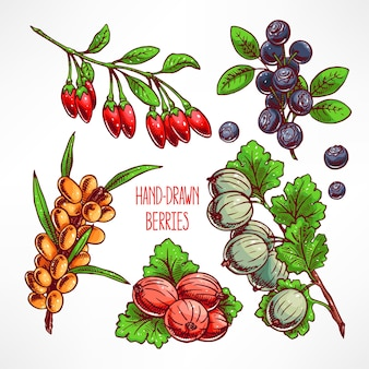 Zestaw z różnymi dojrzałymi jagodami i liśćmi