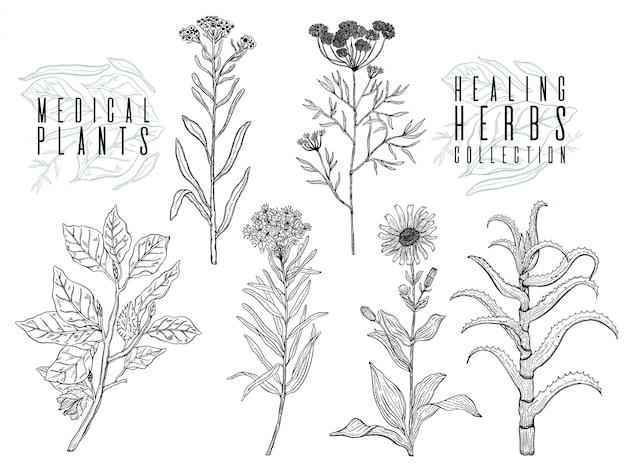 Zestaw z rysunkiem dzikich roślin, ziół i kwiatów, monochromatycznych ilustracji botanicznych w stylu vintage