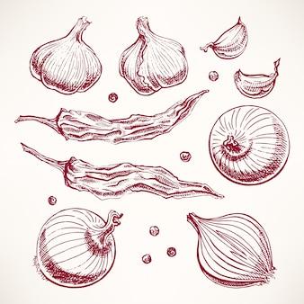 Zestaw z warzywami i przyprawami. ręcznie rysowane ilustracji