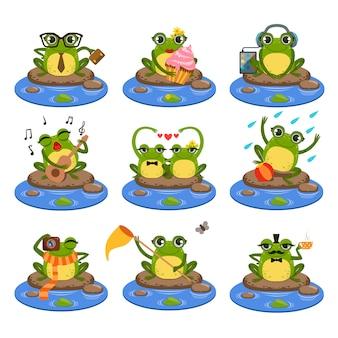 Zestaw żab siedzi na kamieniu