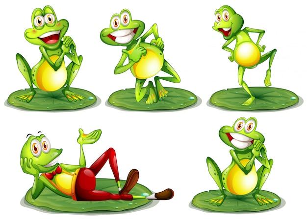 Zestaw żab