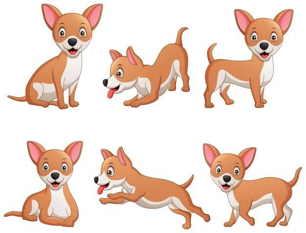 Zestaw zabawny pies chihuahua kreskówka. ilustracja