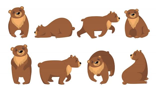 Zestaw zabawnych niedźwiedzi grizzly