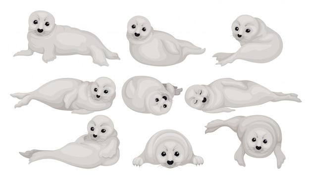 Zestaw zabawnych szczeniąt foki szarej w różnych pozach. zwierzę oceanu arktycznego lub atlantyckiego. ssak morski