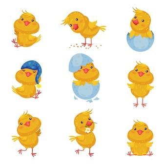 Zestaw zdjęć uroczych kurczaków w różnych sytuacjach iz różnymi przedmiotami