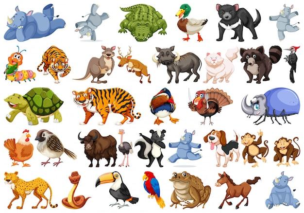 Zestaw zestawów zwierząt