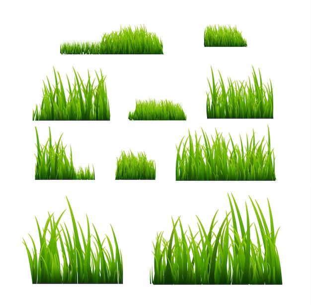 Zestaw zielona trawa na białym tle
