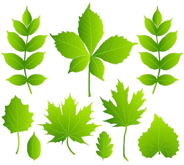 Zestaw zielonych liści na białym tle