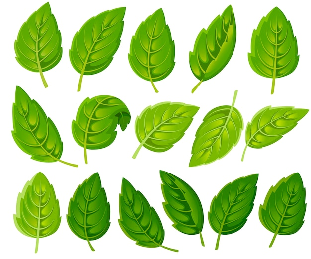 Zestaw zielonych liści. różne kształty liści drzew i roślin. elementy kwiatowe, liściowe. ilustracja na białym tle. strona internetowa i aplikacja mobilna