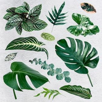 Zestaw zielonych liści tropikalnych