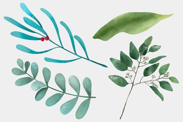 Zestaw zielonych liści