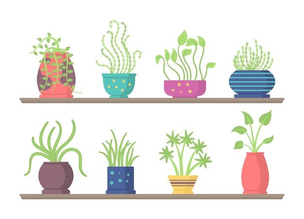 Zestaw zielonych wiszących roślin domowych, elementy do dekoracji wnętrz domu lub biura na białym tle. zestaw roślin domowych na półkach, stojakach, stołach.