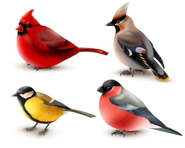 Zestaw zimowych ptaków