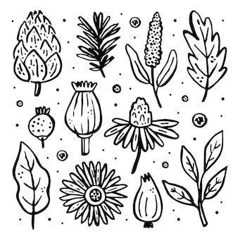 Zestaw ziół. las, ogród dzikie rośliny. kwiat, gałąź, liść, chmiel, szyszka, mak. naturalne, medyczne elementy.