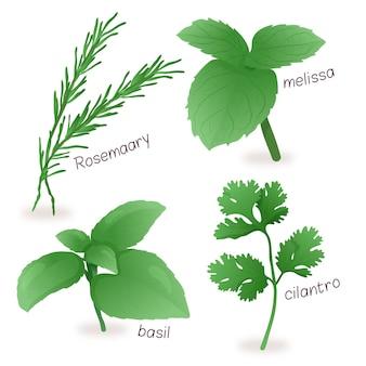 Zestaw ziołowych olejków eterycznych