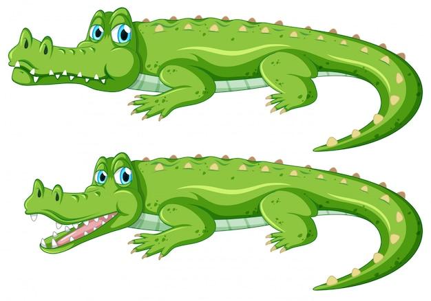 Zestaw znaków krokodyla