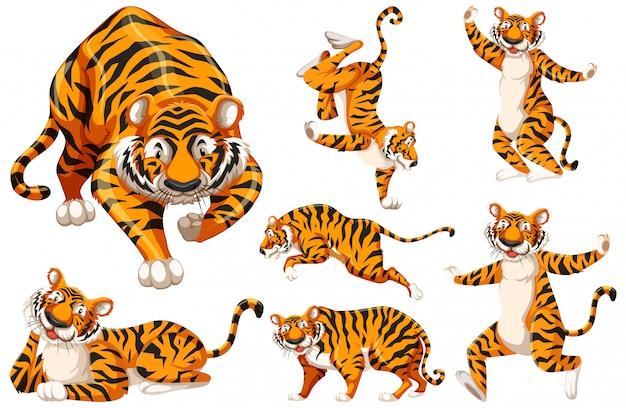 Zestaw znaków tygrysa