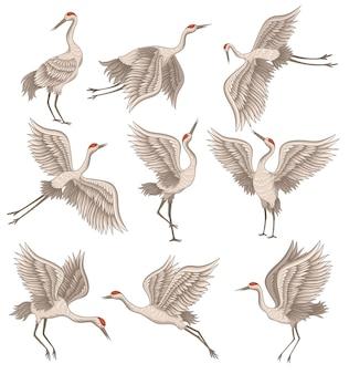 Zestaw żurawia koronowanego na czerwono w różnych pozach. dziki ptak z długim dziobem, nogami i szyją. dekoracyjne płaskie ilustracje