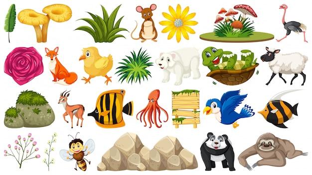 Zestaw zwierząt i roślin