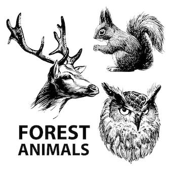Zestaw zwierząt leśnych rysowane tuszem. jeleń, wiewiórka i sowa.