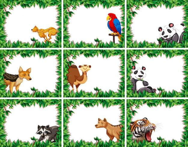 Zestaw zwierząt na granicy przyrody