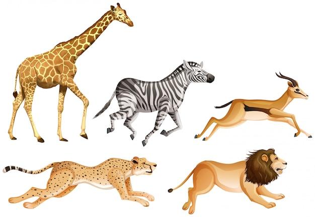 Zestaw zwierząt safari na białym tle