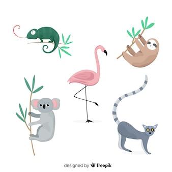 Zestaw zwierząt tropikalnych: kameleon, koala, flaming, lenistwo, lemur ogoniasty. projekt płaski
