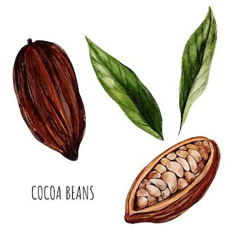 Ziarna kakaowe i liście. ręcznie rysowane akwarela