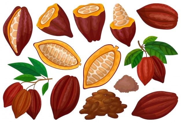 Ziarna kakaowego na białym tle kreskówka zestaw ikon. owocowa czekoladowa ilustracja na białym tle. kreskówka zestaw ikona ziarna kakaowego.