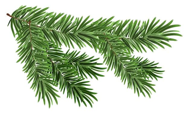 Zielona bujna gałąź świerka. gałęzie jodłowe. na białym tle