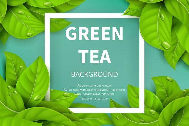 Zielona herbata opuszcza wektorowego natury tło