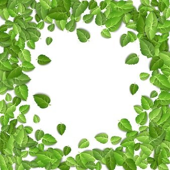 Zielona herbata pozostawia kształt koła na białym tle
