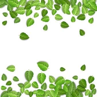 Zielona herbata pozostawia kształt ramy poziomej na białym tle