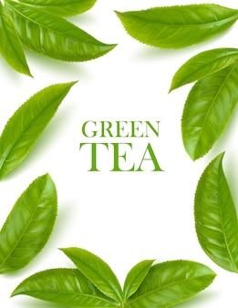 Zielona herbata pozostawia tło ziołowe, wektor