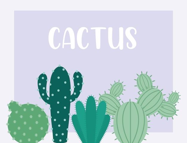 Zielona karta kaktusa