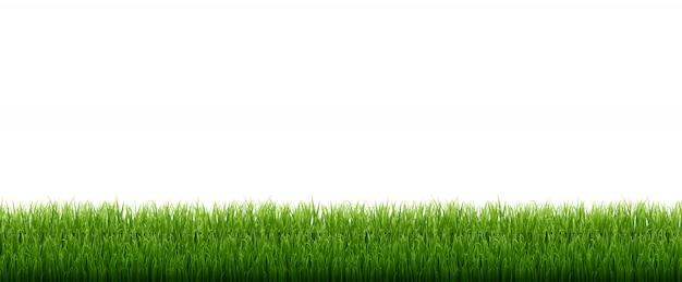 Zielona trawa białym tle