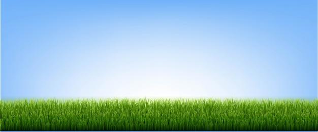 Zielona trawa granicy i błękitne niebo