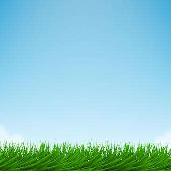 Zielona trawa i jasne błękitne niebo