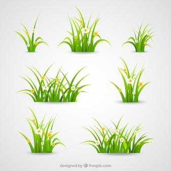 Zielona trawa kolekcji