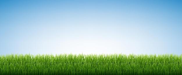 Zielona trawa na białym tle błękitnego nieba z siatki gradientu